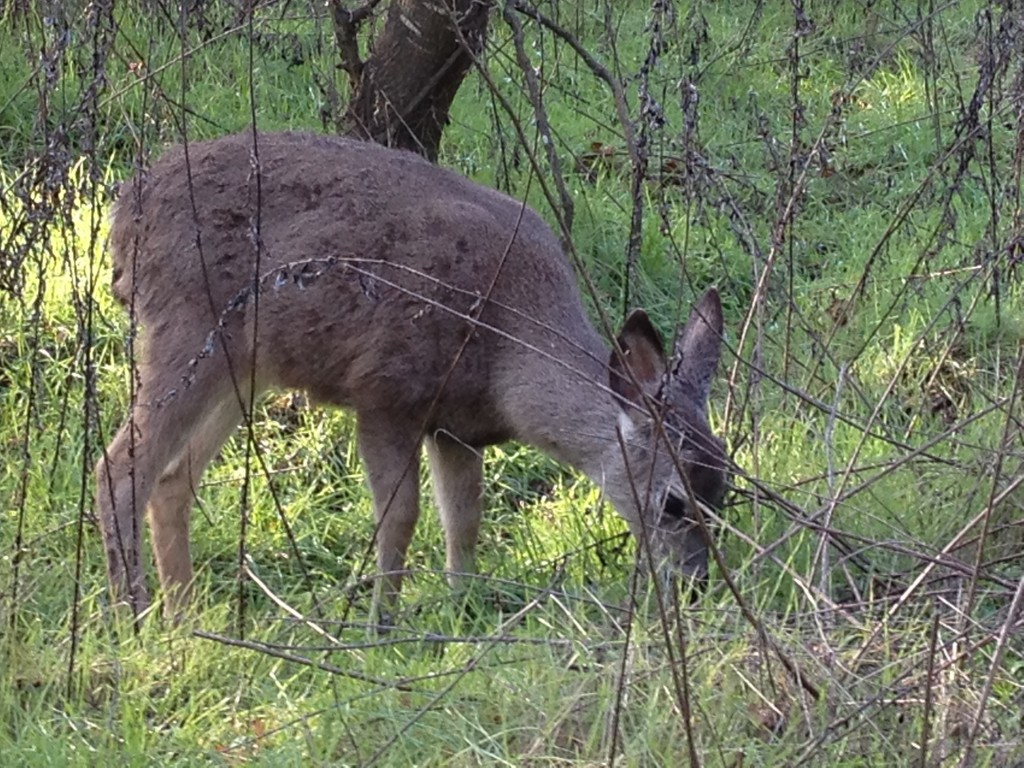 If we can create places of safety that this deer enjoys in the nature center where I walk, we can create a world that is safe for women and children. In fact, for all sentient beings!