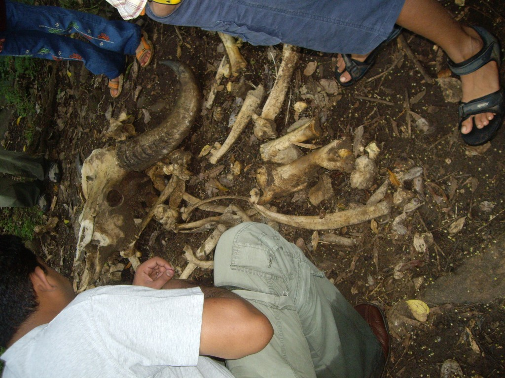 Sifting through our buried emotions reminds me of coming upon these bones on a trial in Southern India so long ago. We are asked to reclaim our feelings just as our mother reclaims our bones, freeing all for new growth.
