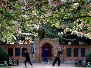 At the Shakespeare Garden in Golden Gate Park, the cherry blossoms framed the men doing tai chi. I loved how the two were mirroring one another.....the balance being shown to me.