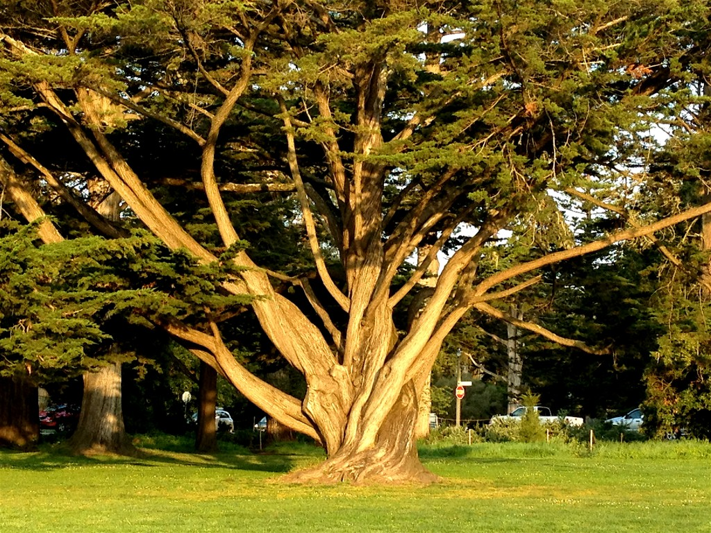 I am glowing like this beautiful tree, soaking up the love of the sun.