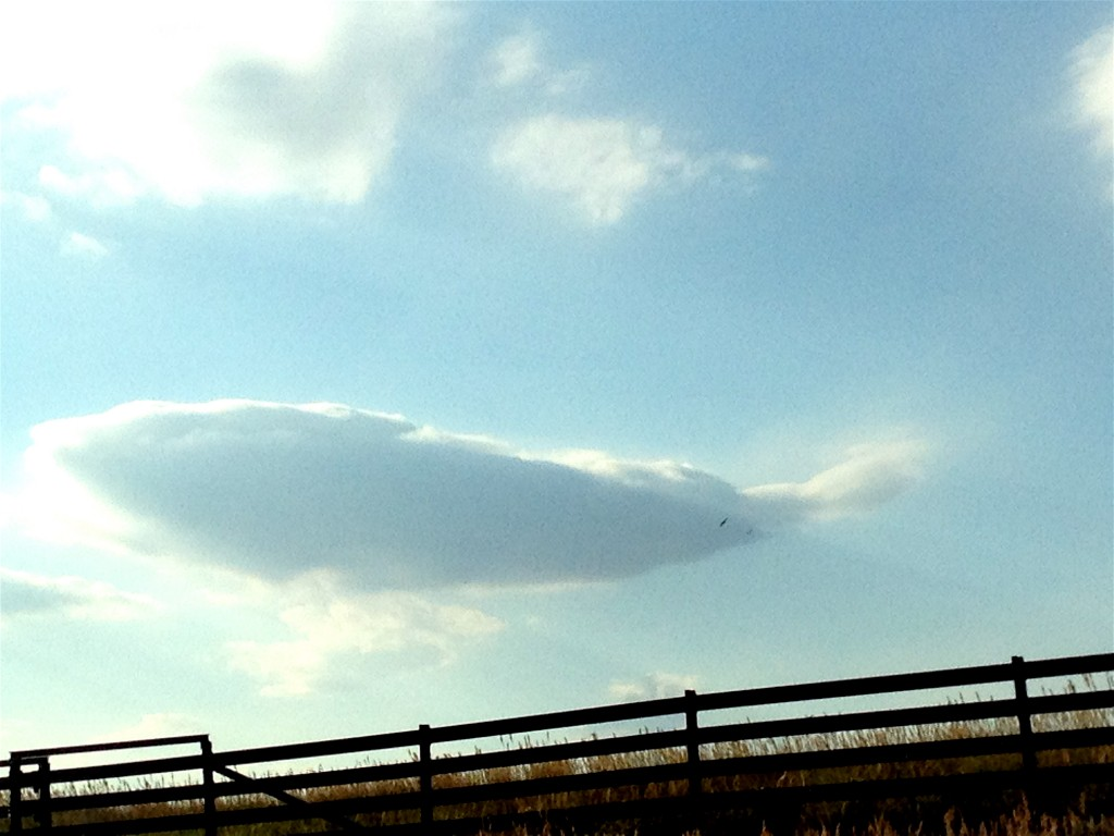 The whales come to play on my drive.