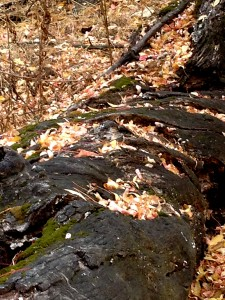 I felt at one with this log and leaves, nestled together, sinking into the mother in a timeless dance.
