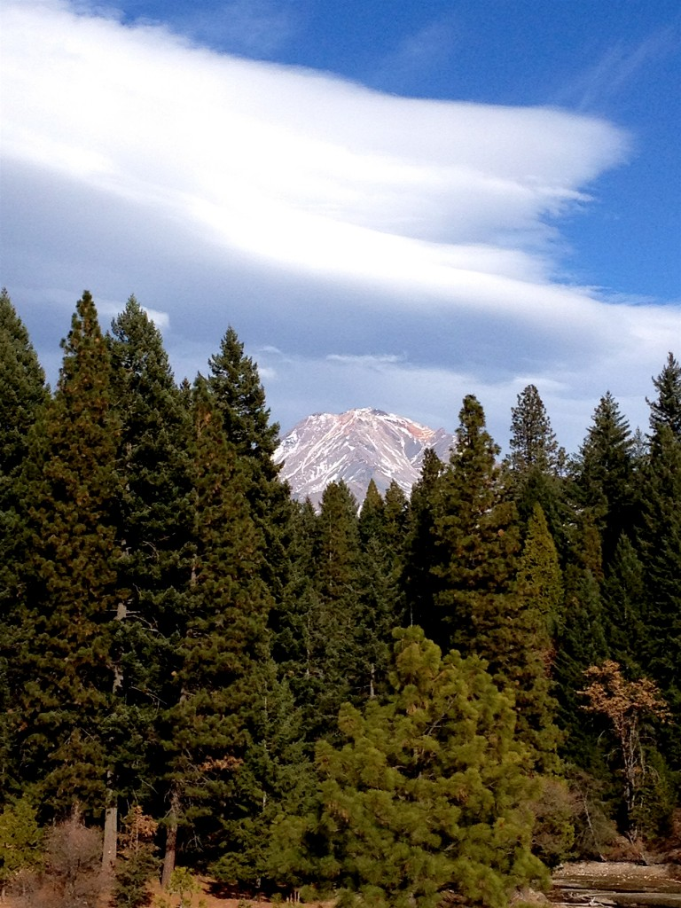 Mount Shasta through the trees.