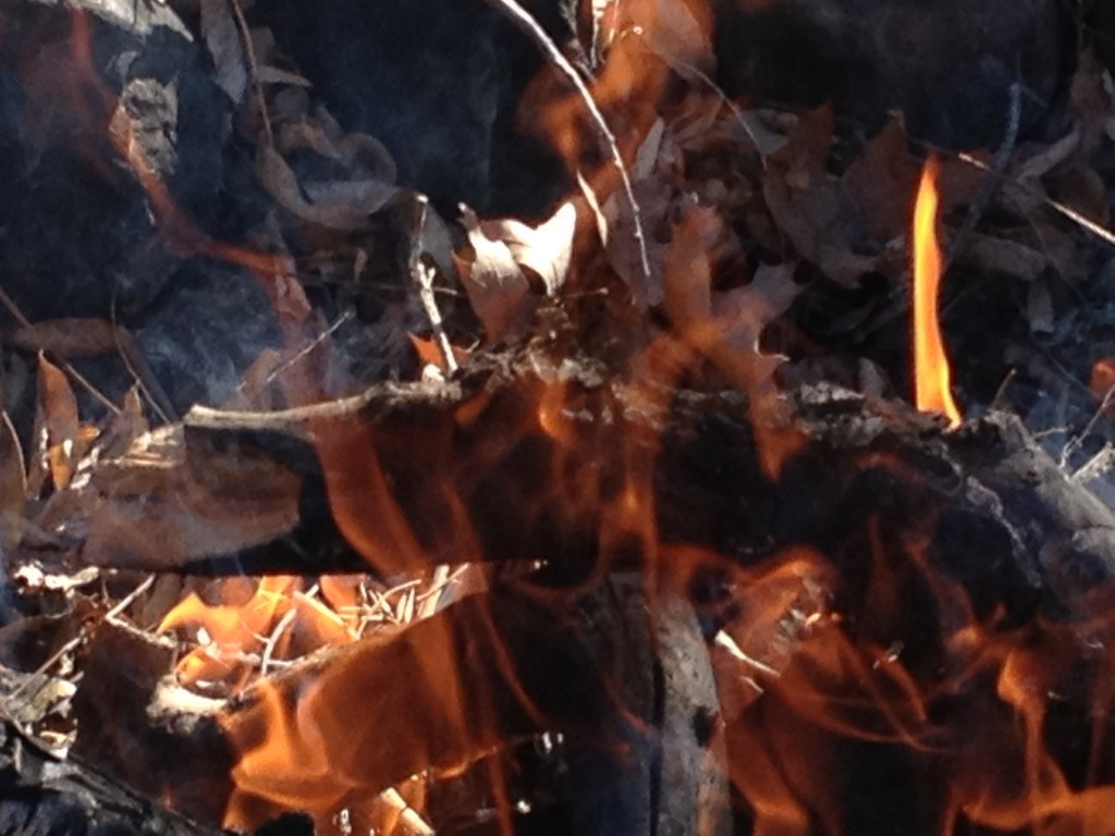 All the elements and kingdoms are working to bring the balance. See the dragon within the flames?