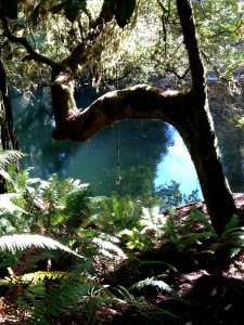 A rope swing in the redwoods inviting me back to jump into its crystal pool.