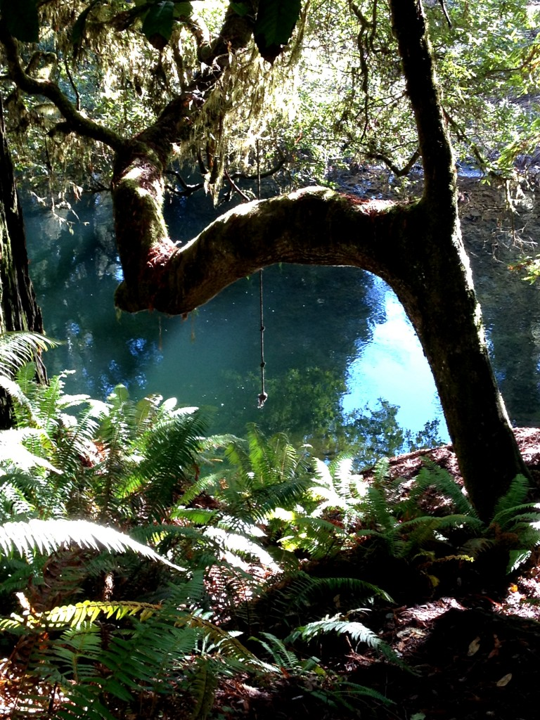 A rope swing in the redwoods inviting me back to jump in its crystal pool.