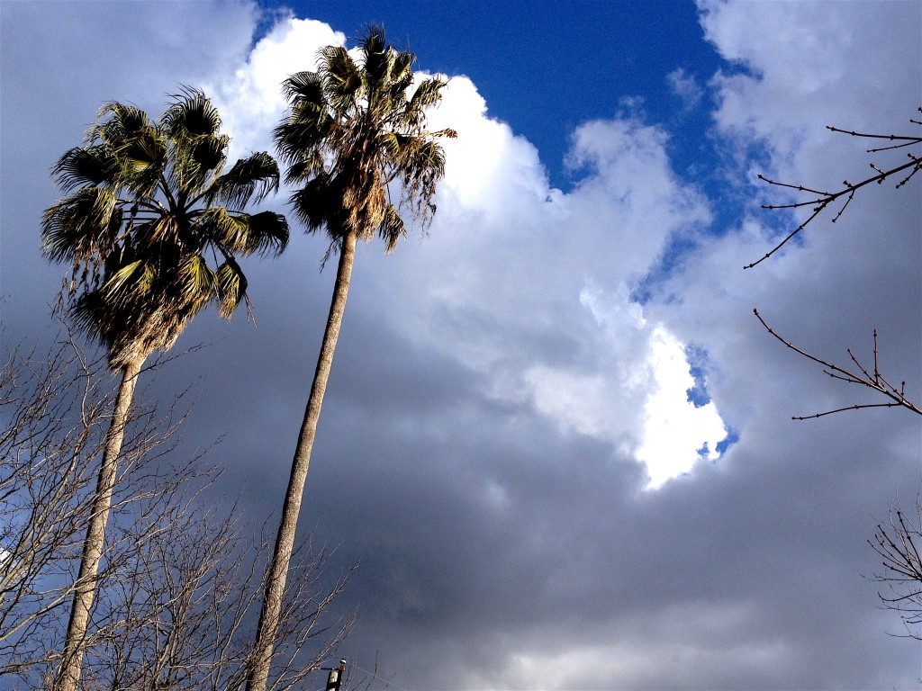 Expanding beyond the limits of linear form, say the palm trees.