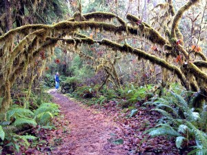 A faery arch in the redwoods, symbolizing the joining to come.