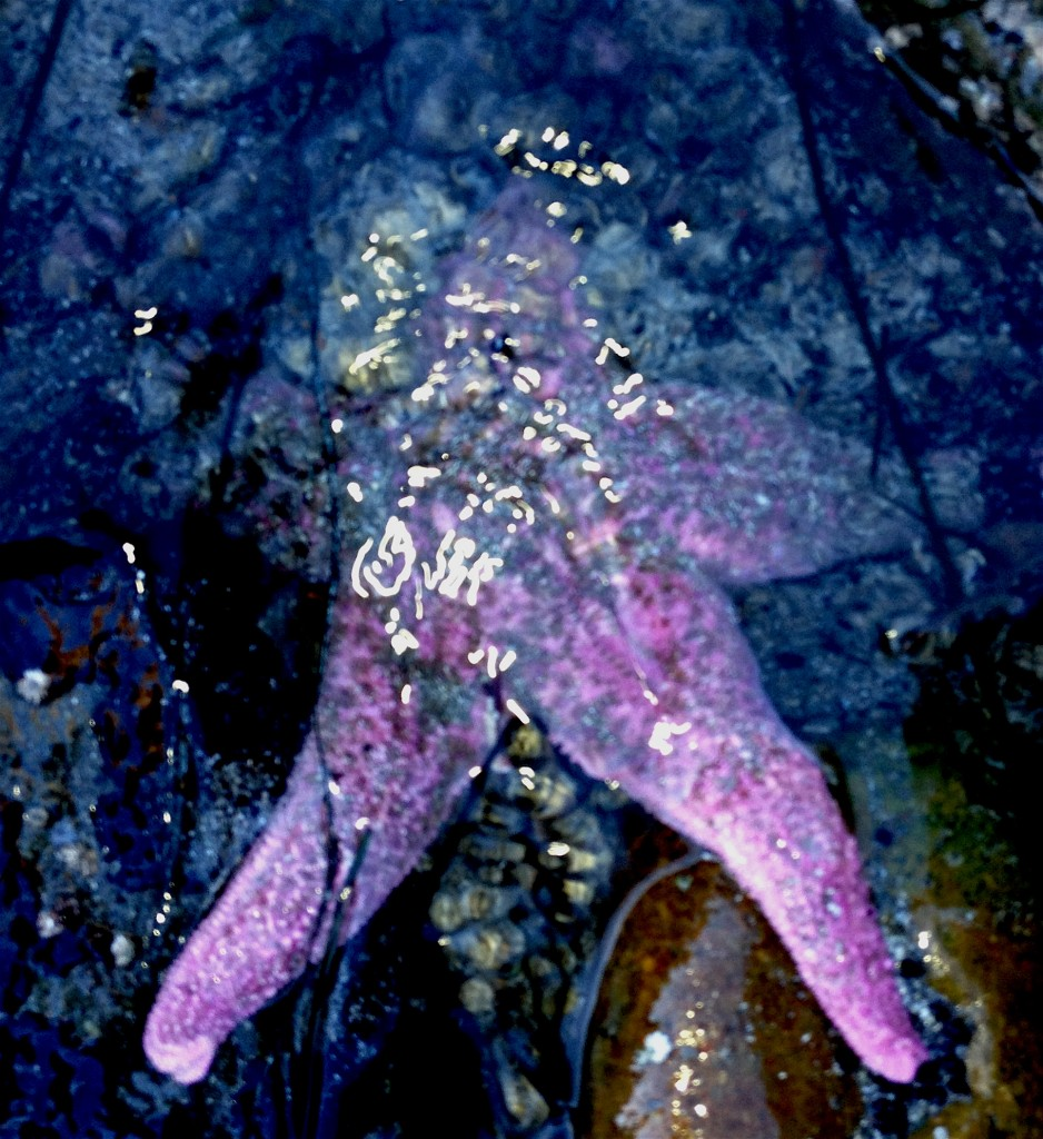 This pink starfish was almost hidden until the sunlight revealed her. We are being called out by the sun to reveal our true colors.