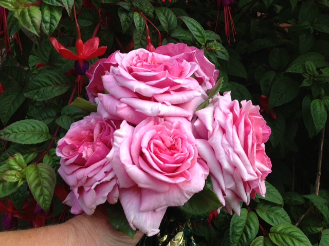 If I could, I would gift every human on the planet, with a pink rose of the Mother's love.