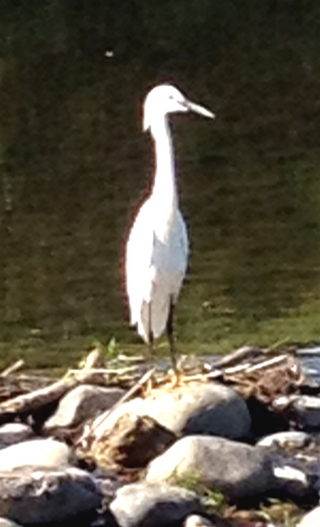 In this moment, I can be an egret, stately in stance, fluid in flight.