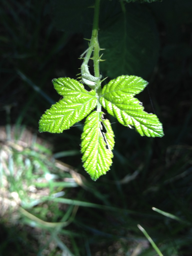 Illuminated by a shaft of sunlight, this leaf quivers with life. Allowing myself to be washed in the sunlight of love that is pouring in.