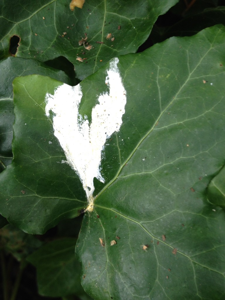 Even bird poop can create beauty! Hearts of love when we look for them...they appear everywhere!