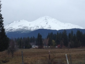 Mount Shasta came out one morning in her white cloak to be admired.