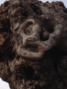 A face in a gnarled branch, whispering to me.
