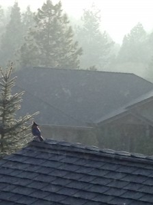 Bird observing the morning mist roll away. Me observing the bird!