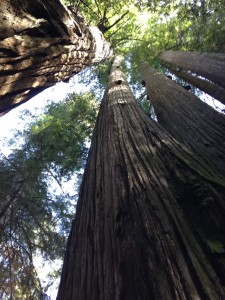 Called to the ocean and the redwoods for my work, communing with their vastness and ancient wisdom.