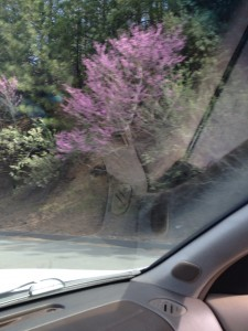 The redbuds were flames blooming along my drive north.