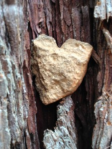 Found heart rocks are now placed in trees so that they can shine their love light to all whom pass by.