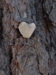 A heart rock I picked up and placed in a tree to shine at passerbys.