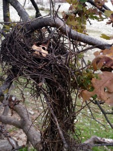 This nest has done its work, now it disintegrates to make way for the new.