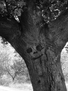 Someone left this carving to smile upon all who pass. The tree spirit reflected this joy.