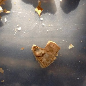 One of my daily heart reminders that appear, this one from a bit of shell as I was cracking walnuts. We are so loved!