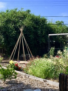 A bamboo teepee planted with pole beans for our little one to enjoy.