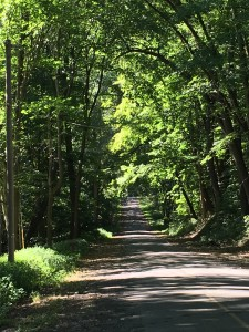 Sun dappled road, breathing in the trees' gift.