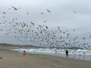 Our time at the beach, grandson delighting being in the midst of all the seagulls.