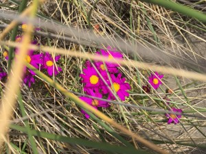 Pop of color amongst the dried grasses.