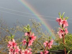 I heard, run outside there is a rainbow. Indeed there was!